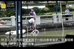 河涌惊现女浮尸 环卫工开价5千打捞