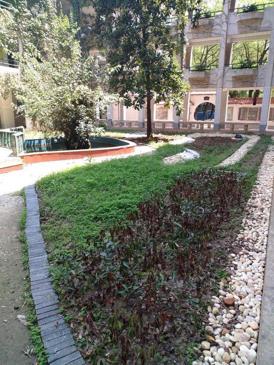 钢城十六中内的大型雨水花园