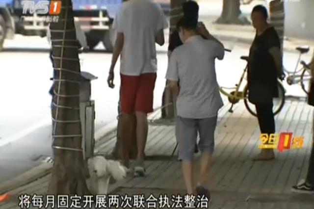 广州开展最严养犬执法:养犬不登记遛狗不牵绳均查