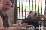 武汉这位医生给人看完病 还要给大熊猫看病