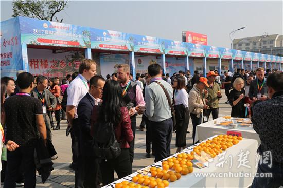 国外客商在宜昌市柑橘展销会上品尝柑橘