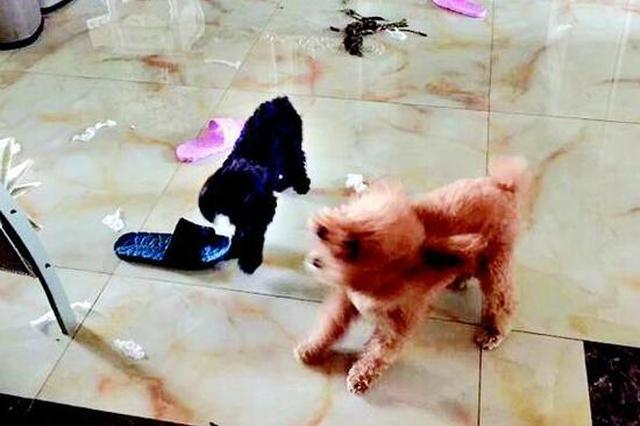 汉阳小区发生多起小狗疑似中毒死亡事件 警方已介入