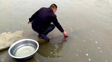 """渔民在汉江里发现""""东方美人鱼"""""""