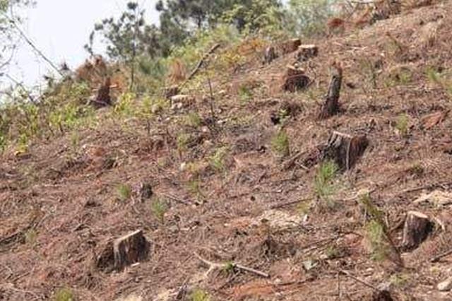 黄陂对破坏生态环境坚决说不 2村民挖山毁林被起诉