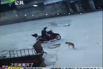 警方破获偷狗团伙 毒针杀狗卖进饭店