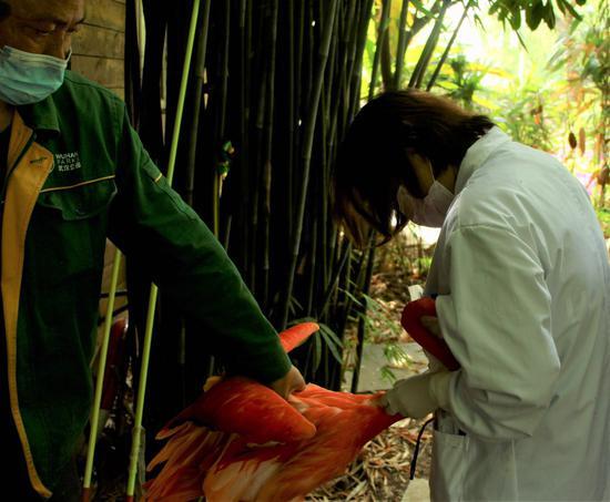 又到秋防季 鸟儿们排队打疫苗