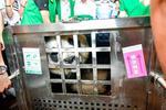 """武汉动物园迎来大熊猫""""姐妹花"""" 最快7天后对外展出"""