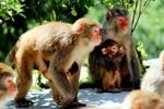 神农架猕猴乐园正式开门迎客