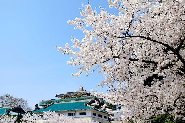 武汉大学今起开始实名赏樱 1.5万人限额已约满
