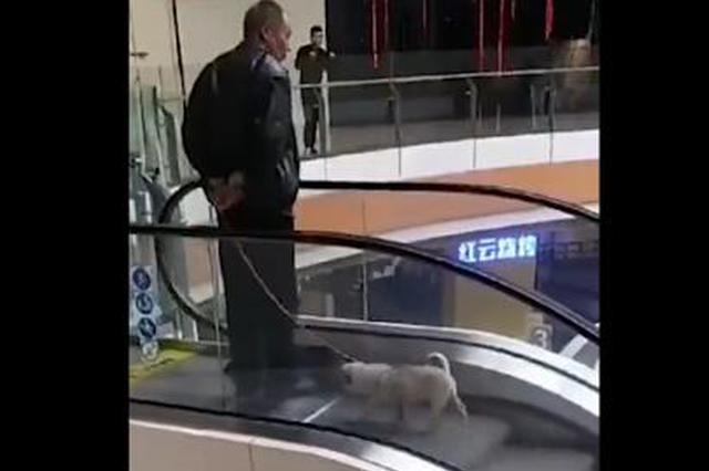 老人在商场下行扶梯淡定遛狗 网友:这算什么佛系