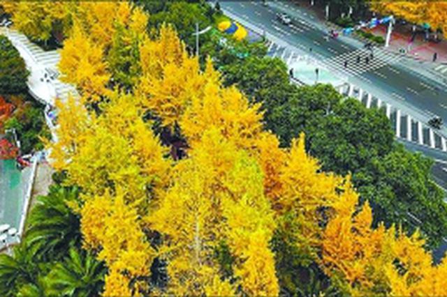 武汉长江主轴多个项目开工 明年10月景观轴初步形成