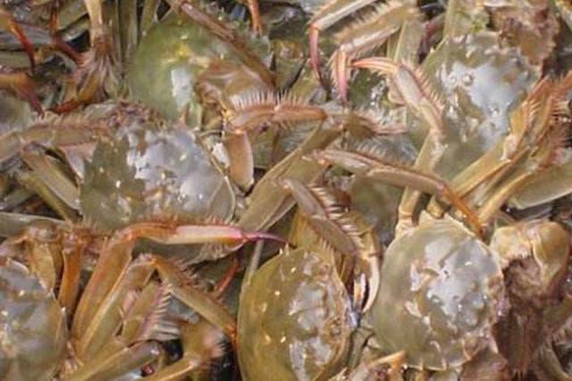 第一批成熟河蟹批量上市 规格相同身价为何差一倍?