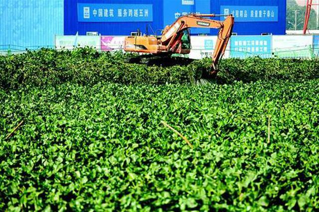 武汉北湖水体污染严重 每天运走数十车水葫芦