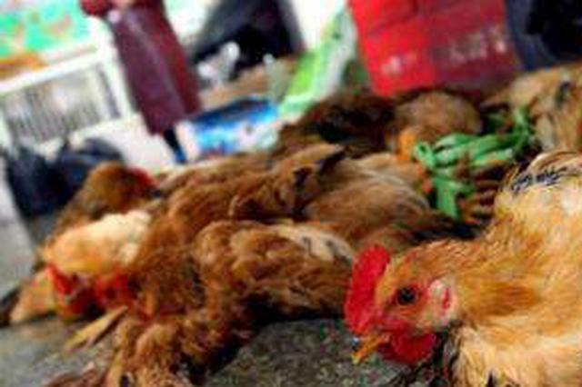 宜昌發生一起高致病性禽流感疫情 340羽家禽死亡