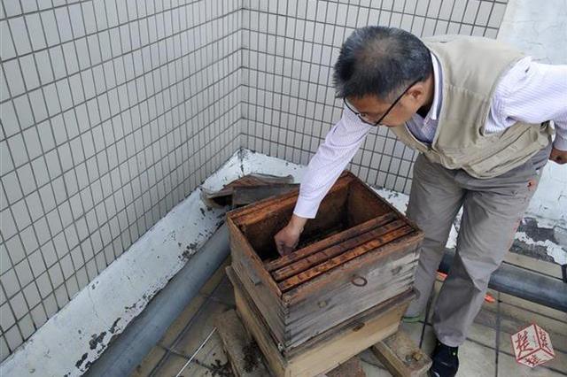 蜂療師小區內養千只蜜蜂鄰居擔憂 養蜂業主:近期搬離