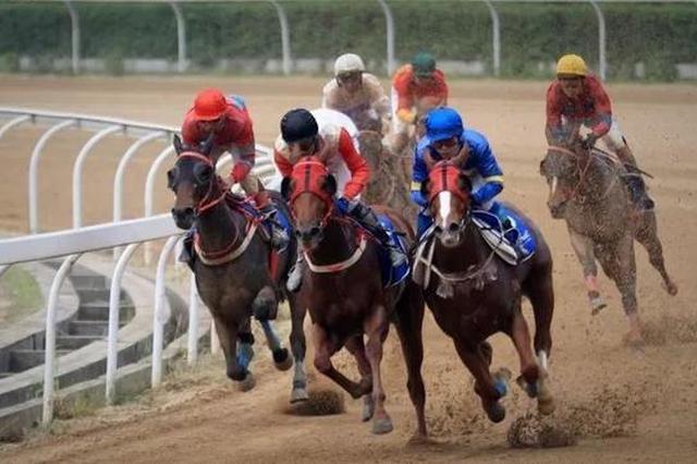 武漢國際賽馬節開幕 200多匹賽駒參賽創歷屆之最