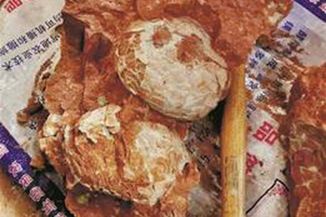 十堰一村民開山建牛圈 挖出30多枚恐龍蛋化石