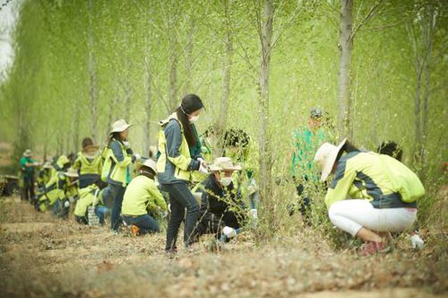 武汉江北片区将新增1万棵大树 更换更有营养的种植土
