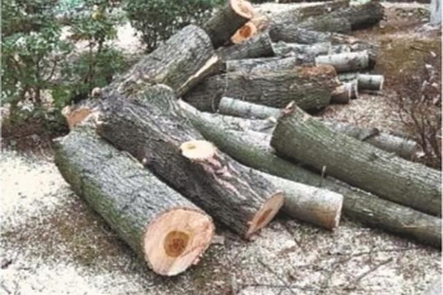 武汉一物业私自砍伐小区树木上百棵 城管部门回应