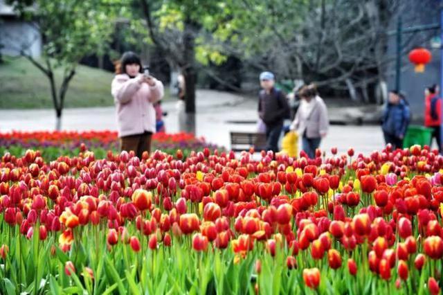 今明武汉有小雨10日转晴 高温将回升至17℃