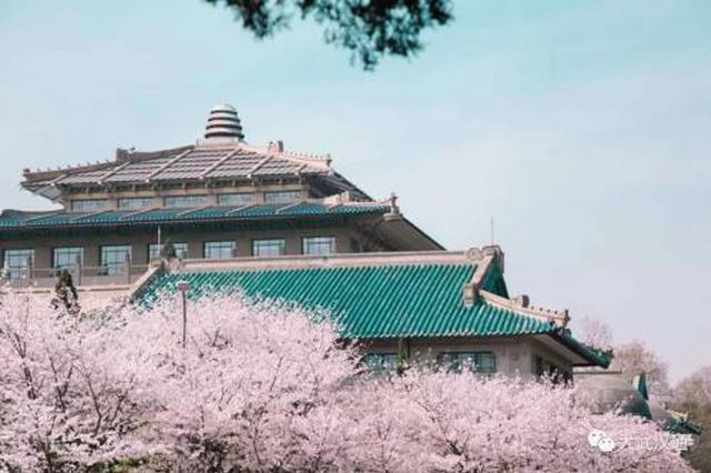 3月27日-4月5日来武汉赏樱吧 全国赏樱地武大热度第二