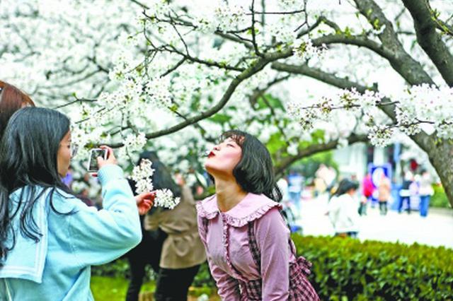武大赏樱限流首日游人如织 大风对樱花未造成太大影响