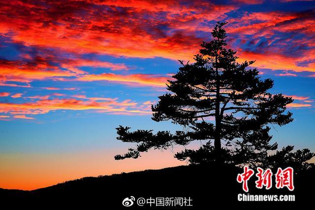 """湖北神农架为60余万株""""树爷爷""""上""""户口"""""""