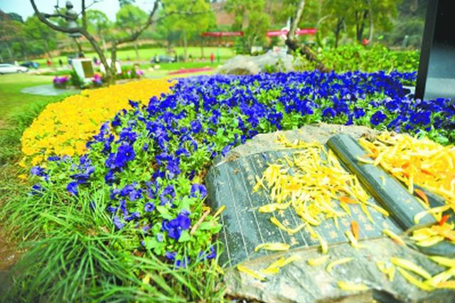 双休日武汉70万市民踏青扫墓 环保葬人数连续3年递增