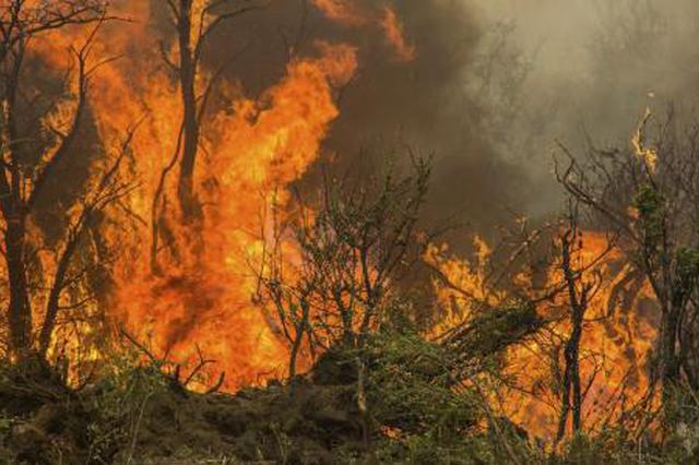 清明期间武汉发生山火火警29起 已全部扑灭无人员伤亡
