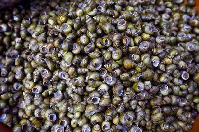 男子雇人每天在府河捕捞数千公斤螺蛳 被判刑半年