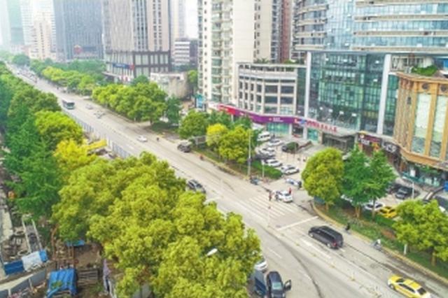 """武汉城市建设道路为树木""""让路"""" 425棵大树这样保留"""