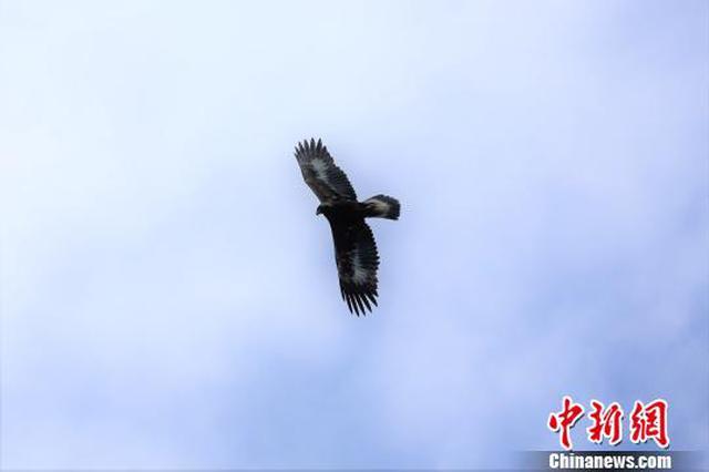 神农架大九湖湿地水鸟种群逐步恢复(图)