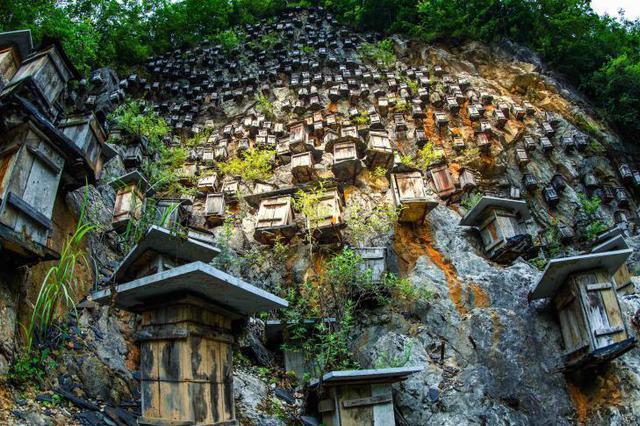 """神农架悬崖上的""""甜蜜王国"""" """"崖壁蜂箱""""成独特景观"""