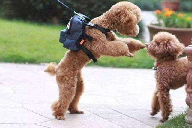 湖北女子将遗产留给两条狗引网友热议 公证处回应