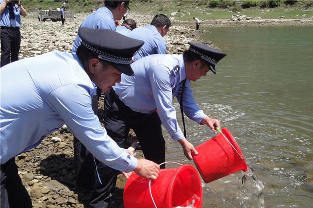 湖北郧西放流鱼苗8万尾 修复汉江生态环境