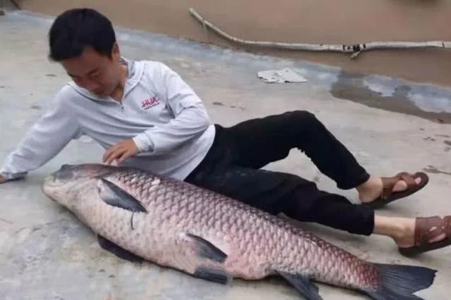 荆门一男子在水库钓起超大青鱼 长1.4米重74斤!