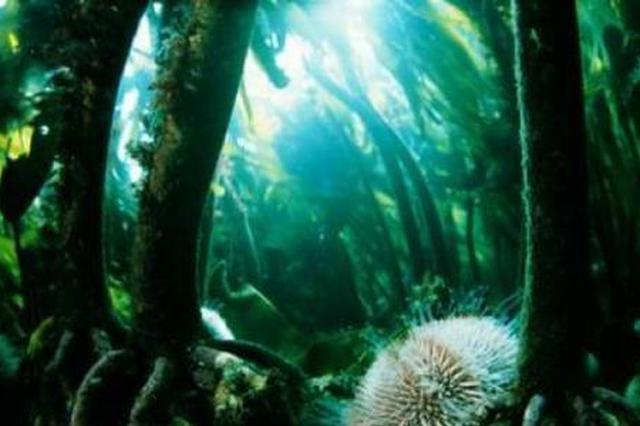 武汉东湖水域内禁止放养种植有害水生动植物