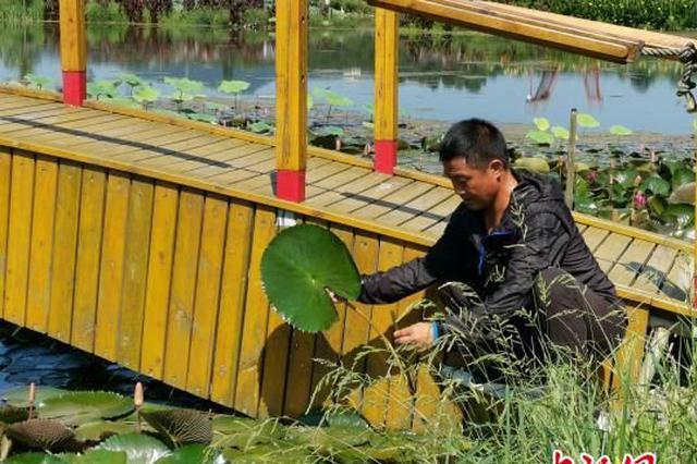 湖北一农民自创鱼菜共生生态种养系统