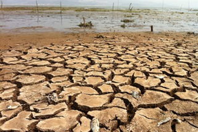 干旱造成湖北4市11县57.18万人受灾