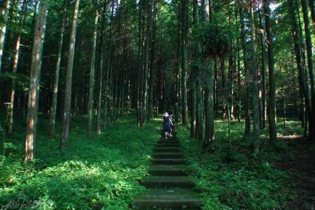 第三批国家森林步道名单公布 湖北两处入选