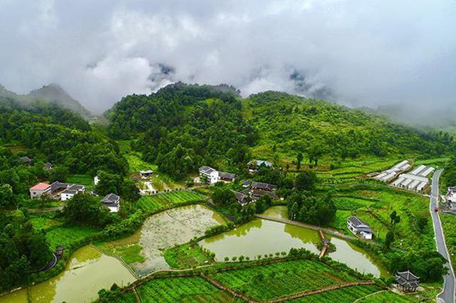 湖北启动乡村绿化美化行动 今年建300个国家森林乡村