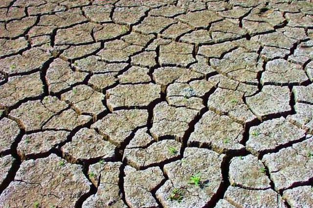 鄂北地区旱情全省最重 近500万亩农作物受旱
