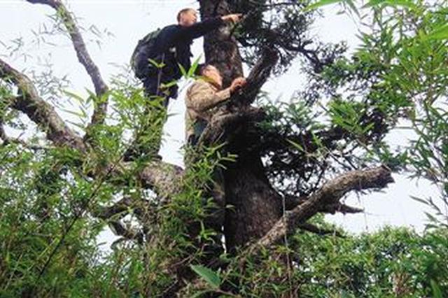 湖北推进昆仑5号行动 打击破坏野生动植物资源行为