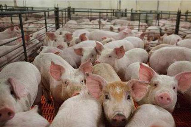 湖北出台措施支持生猪生产 种猪场最高可获200万补助