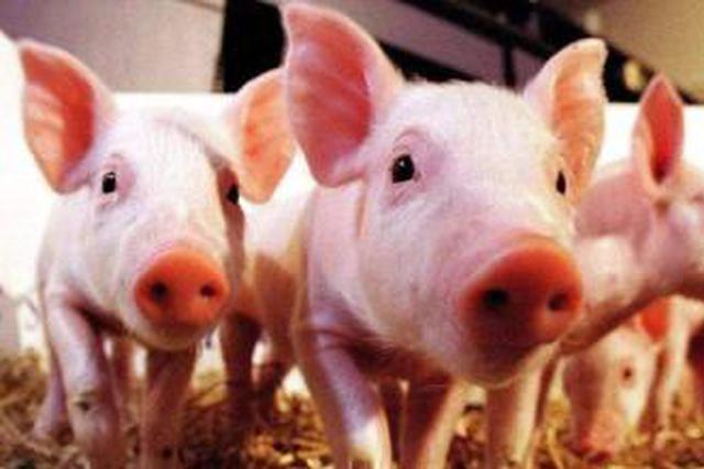 鄂出台措施支持生猪生产 种猪场最高可获200万元补助