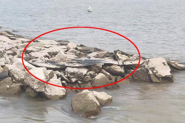 """""""三峡水怪""""近照来了:挂在池州一码头石堆上"""
