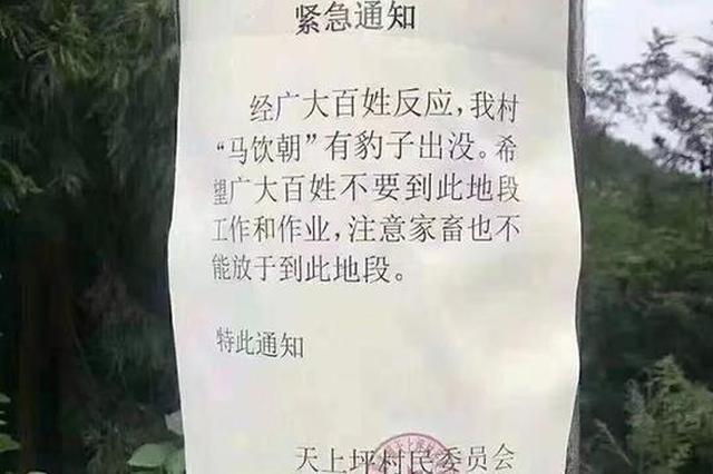 湖北来凤村民反映有豹子出没 林业局:连日蹲守未发现