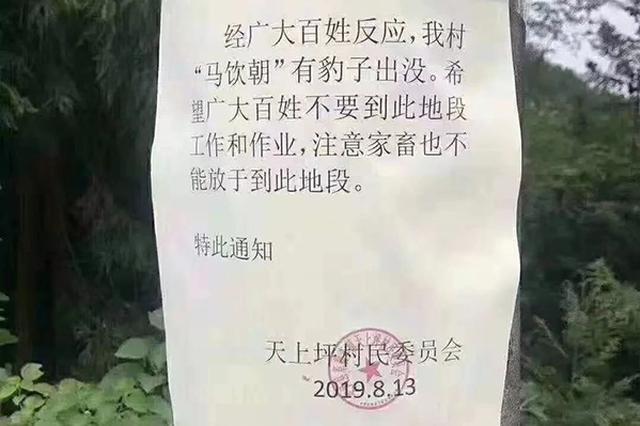 """村委会紧急通知""""豹出没"""" 来凤林业局:连日蹲守未发现"""