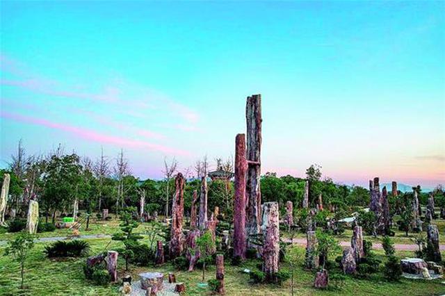 黄石建成世界最大树化石林 1314棵树化石述说亘古之恋