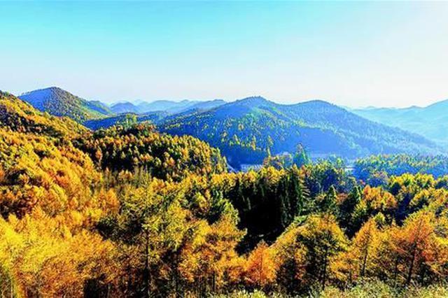 湖北出台国有林场发展规划 实施11项重大工程